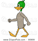 Pal Clipart of a Mallard Duck Walking Upright by Cartoon Solutions